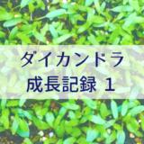 ダイカンドラ成長記録1