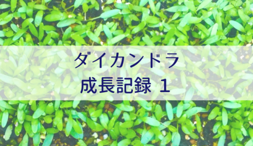 ダイカンドラ成長記録①【失敗!?編 】プランターに種まき〜移植