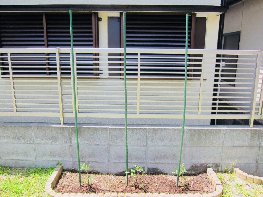 家庭菜園のミニトマトに支柱を立てる