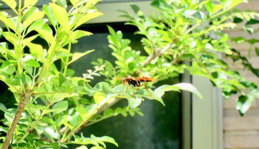 シマトネリコにアシナガバチが!実は益虫!予防策や対処法は?