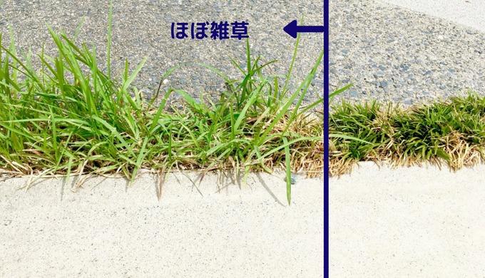 駐車場目地のタマリュウ部分がほぼ雑草に