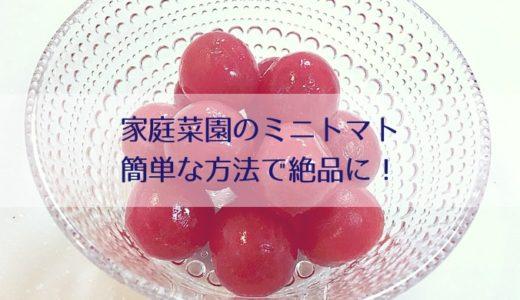 家庭菜園のミニトマトの皮が固い!甘くない!簡単な方法で絶品に