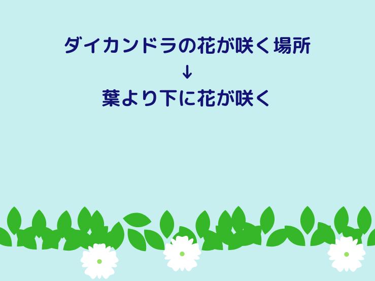 ダイカンドラの花が咲く場所
