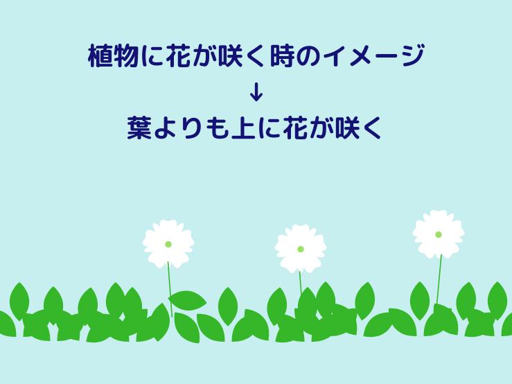 植物に花が咲く時のイメージ